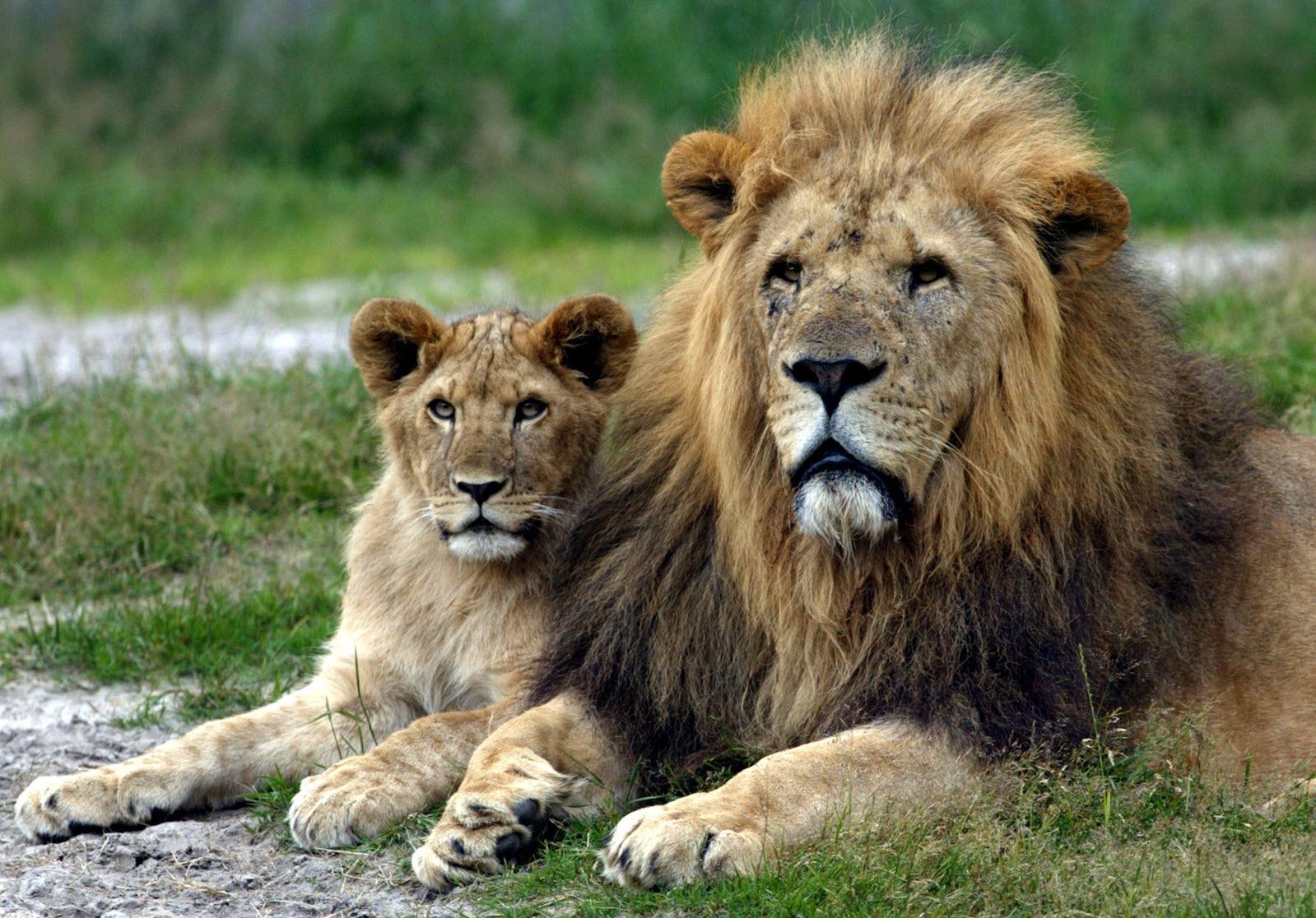 Givskud Zoo rabat byen svinger